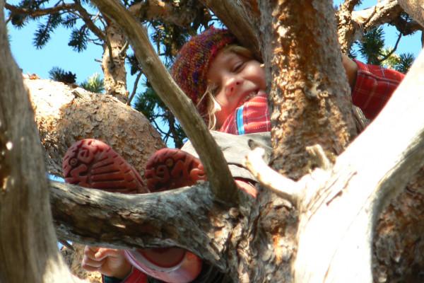 climbing on a tree
