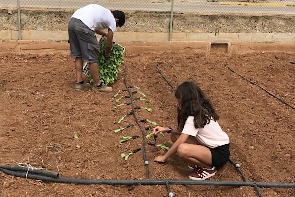 Ecological school gardens